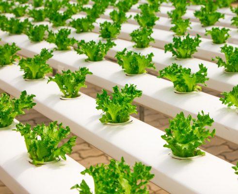 Case: Elintarvikevalmistajan integraatioalusta